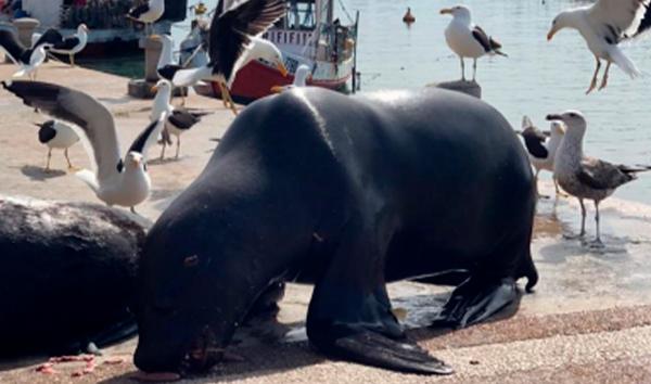 Propuesta de políticas de gestión integral de residuos sólidos del puerto de Punta del Este en baja temporada