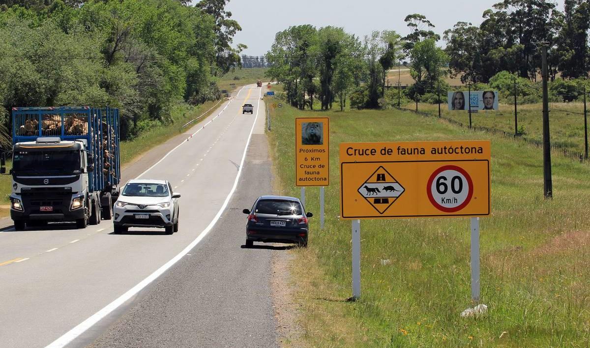 Medidas para la disminución de atropellos de fauna en ruta 9