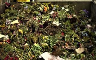 Residuos orgánicos acopiados